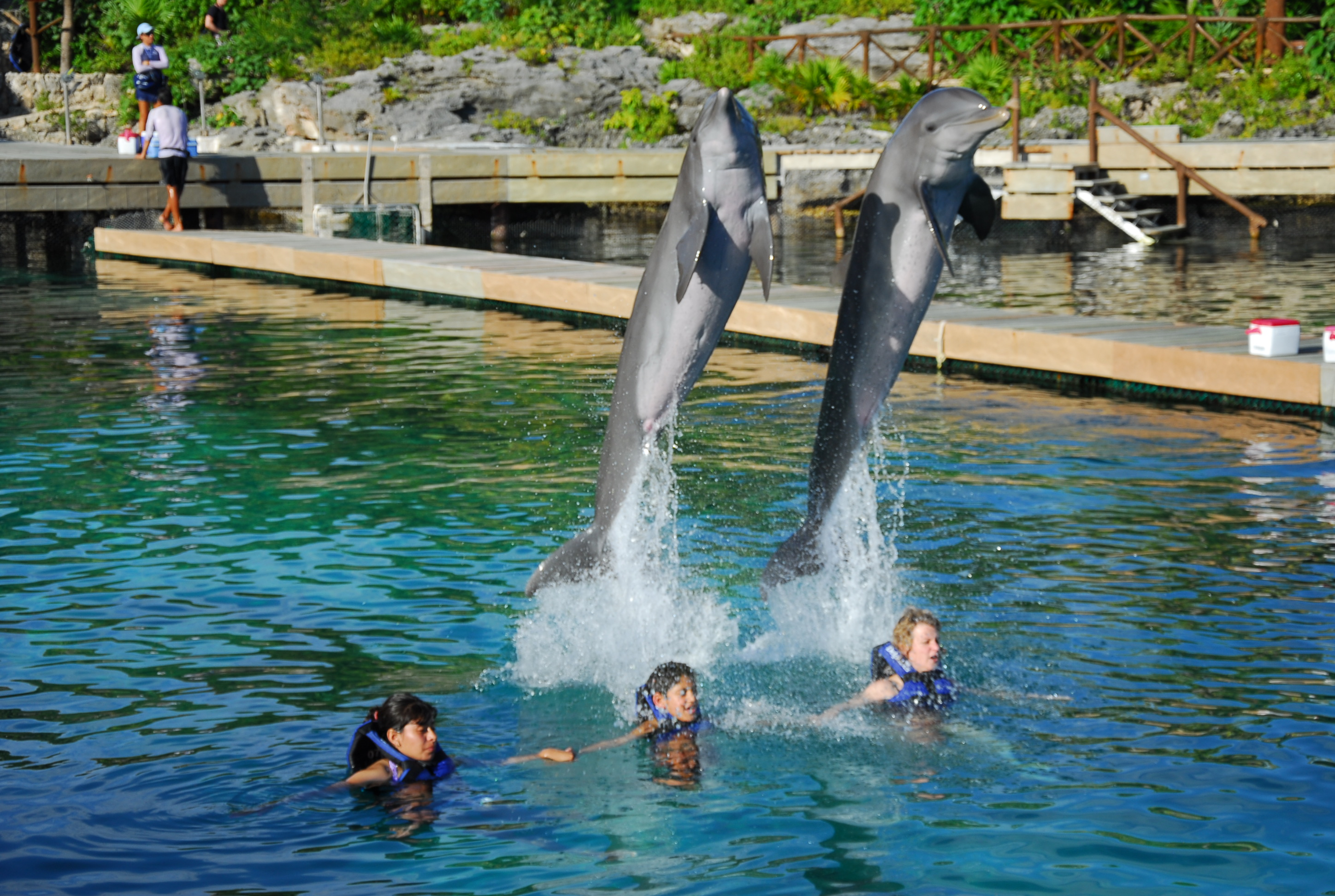 The Magic of Swimming with Dolphins