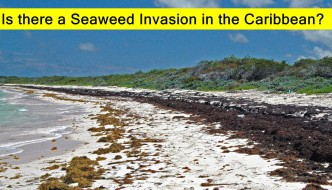 How Bad is the Seaweed in the Caribbean?